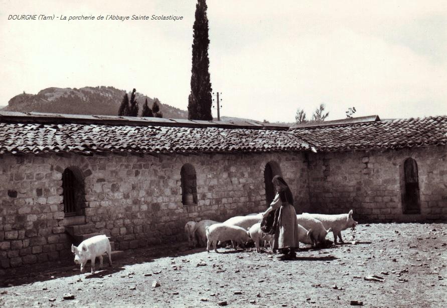 Dourgne (Tarn) CPA Abbaye Saint Scholastique d'En-Calcat, porcherie