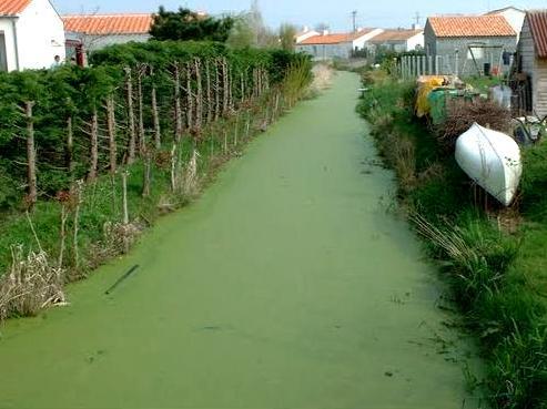Le Perrier (Vendée) Un canal