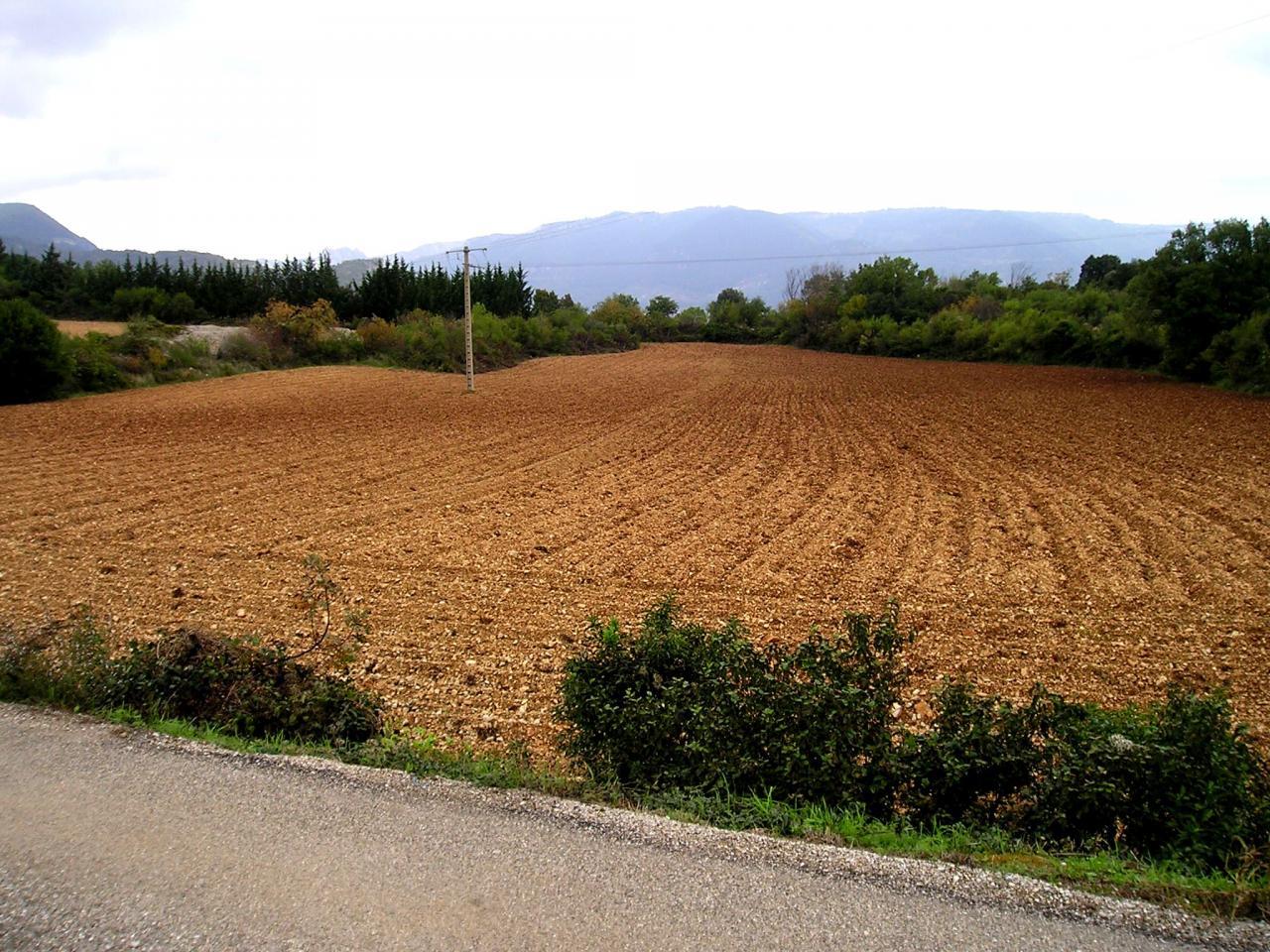 Lodève, mon héritage l'ancienne vigne des Grasseries en 2005
