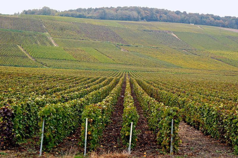 Passy-sur-Marne (Aisne) le vignoble