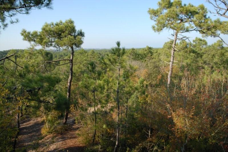 Saint-Hilaire-de-Riez (Vendée) La forêt
