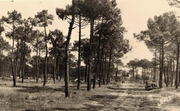 Saint-Jean-de-Monts (Vendée) Le sous-bois en 1949