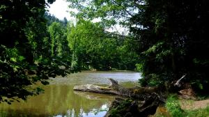 Arboretum lac de pezanin