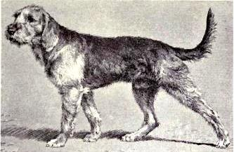 Chien griffon nivernais from 1915