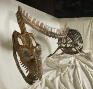 Occitanosaurus tournemirensis