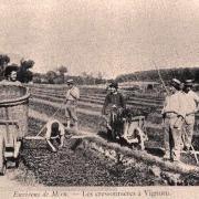 Amblainville oise cpa vignoru les cressonnieres