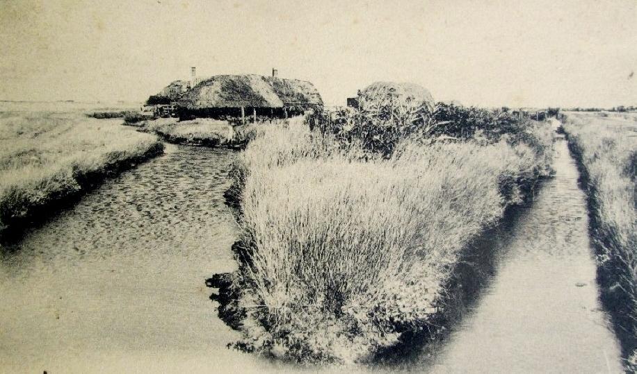 Beauvoir-sur-Mer (Vendée) Bourrine dans le marais CPA