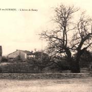 Cernay-en-Dormois (51) L'arbre de Rosny CPA