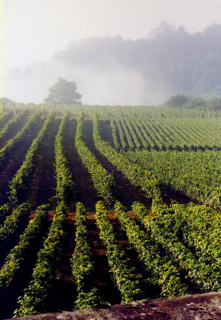La Rochepot (Côte d'Or) Le vignoble