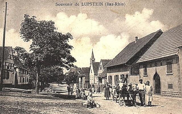 Lupstein 67 cpa