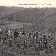 Pouilly-sur-Loire (Nièvre) Les vendanges CPA
