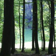 Quincy-Landzécourt (Meuse) L'étang du Fond de l'Aunois