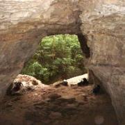 Roquefort-sur-Soulzon (Aveyron) La grotte des fées