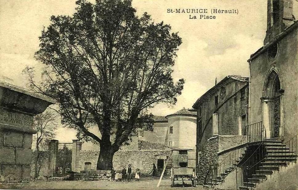 Saint-Maurice-Navacelles (Hérault) La place de l'Ormeau CPA