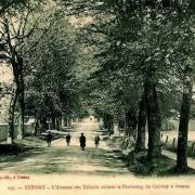 Stenay (Meuse) Cervisy, l'avenue des tilleuls CPA